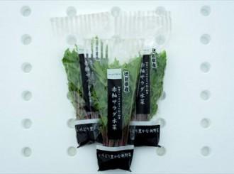 赤軸サラダ水菜